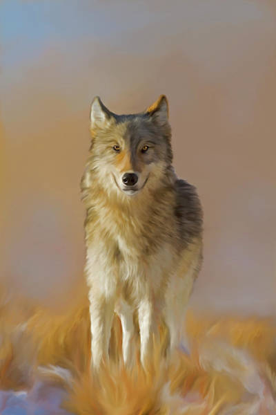 Digital Art - Wild Yellowstone Wolf by Mark Miller