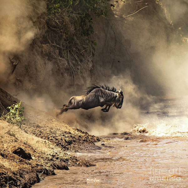 Wall Art - Photograph - Wildebeest Leaps From The Bank Of The Mara River by Jane Rix