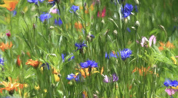 Wall Art - Photograph - Wildflower Abstract by Donna Kennedy