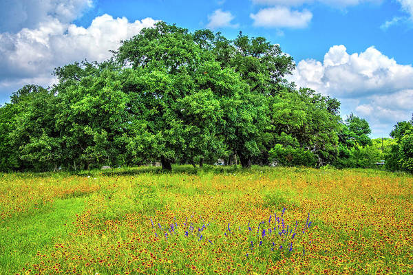 Photograph - Wildflower And Oak Dream In The Hill Country by Lynn Bauer