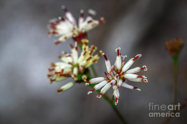 Photograph - Wildflower At Hawk's Bluff by Tom Claud