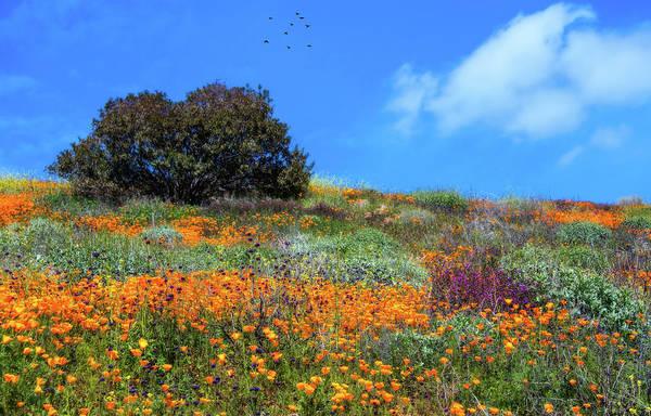 Photograph - Wildflower Dream In Walker Canyon by Lynn Bauer