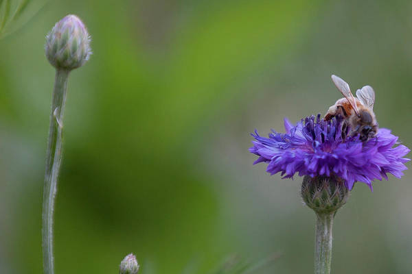 Photograph - Wildflower Friend by Flyinghorsedesigncom Photography