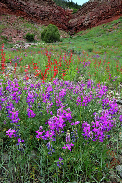 Photograph - Wildflower Garden Along Highway 145 by Ray Mathis