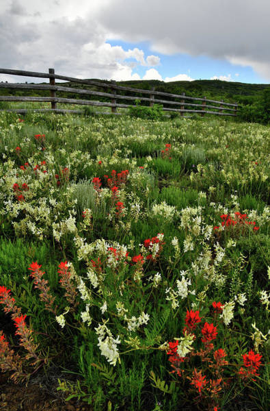 Photograph - Wildflower Garden Along Highway 62 In Colorado by Ray Mathis
