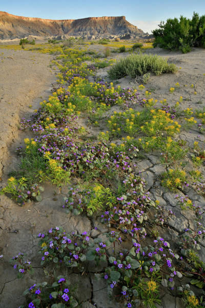 Photograph - Wildflower Garden In Utah Desert by Ray Mathis