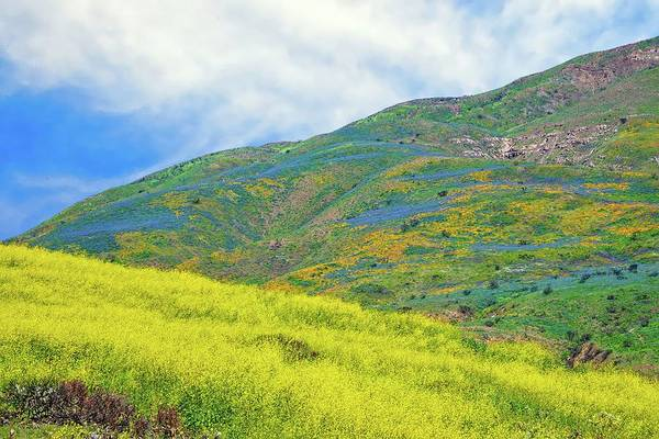Photograph - Wildflower Hills Of Malibu -  Superbloom 2019 by Lynn Bauer