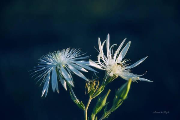 Photograph - Wildflower In White by Karen Slagle