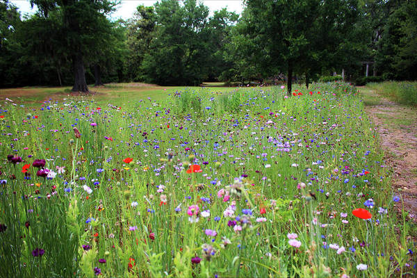 Photograph - Wildflower Landscape by Cynthia Guinn