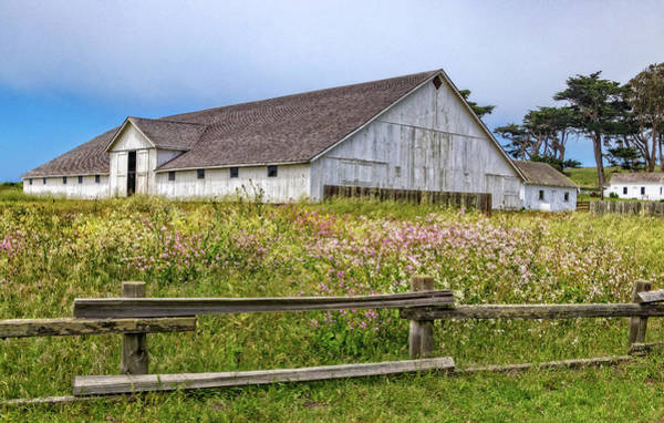 Photograph - Wildflower Meadow At Pierce Point Ranch by Carolyn Derstine