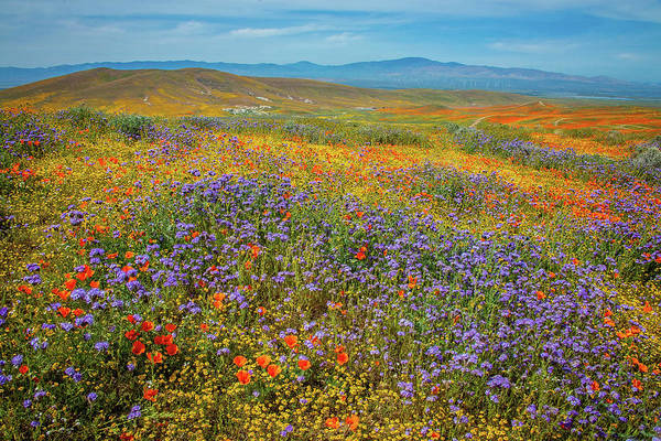 Photograph - Wildflower Oasis In The High Desert - Superbloom 2019 by Lynn Bauer