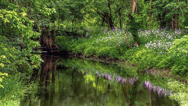 Photograph - Wildflower Reflections by Rod Best