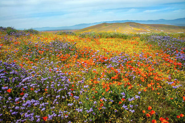 Photograph - Wildflower Sea - Superbloom 2019 by Lynn Bauer