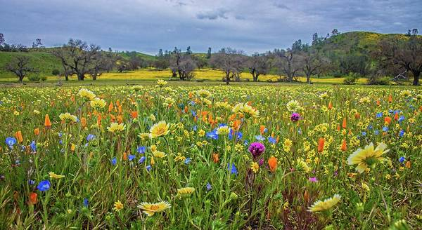 Photograph - Wildflower Wonders Along Shell Creek Road - Superbloom 2019 by Lynn Bauer