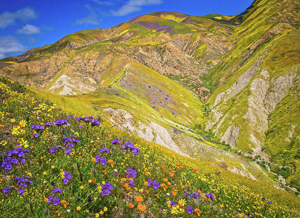 Photograph - Wildflower Wonders Of The Carrizo Plain Superbloom 2017 by Lynn Bauer