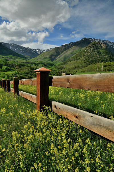 Photograph - Wildflowers Along Last Dollar Road In Colorado by Ray Mathis
