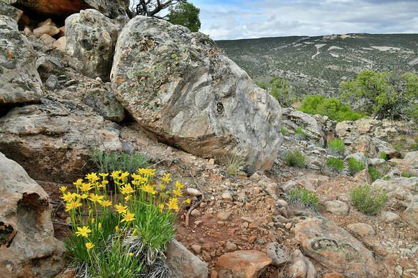 Photograph - Wildflowers Along Little Park Road In Grand Junction by Ray Mathis