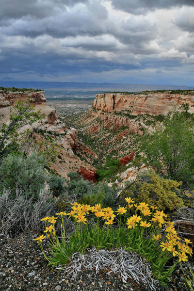 Photograph - Wildflowers Along Rim Rock Drive by Ray Mathis