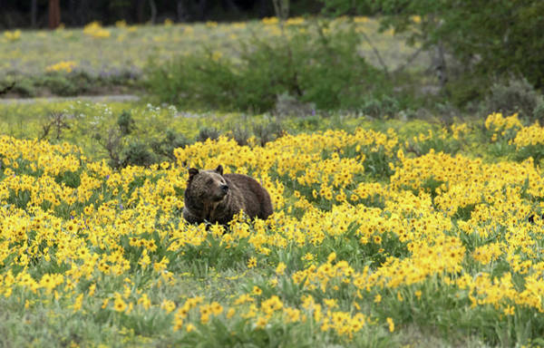 Photograph - Wildflowers And A Bear by Ronnie and Frances Howard
