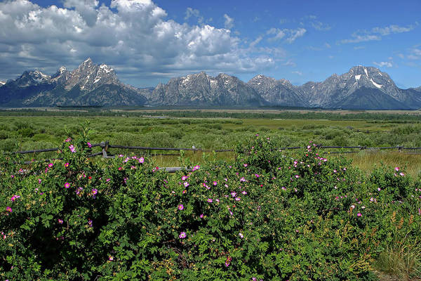 Photograph - Wildflowers And Mountains by Ronnie and Frances Howard