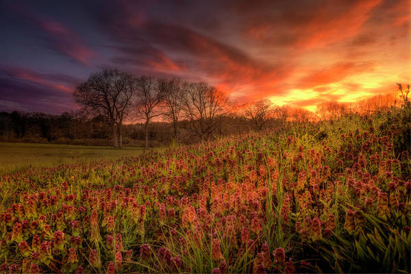 Photograph - Wildflowers And Wildfire Sky by Thomas Gaitley