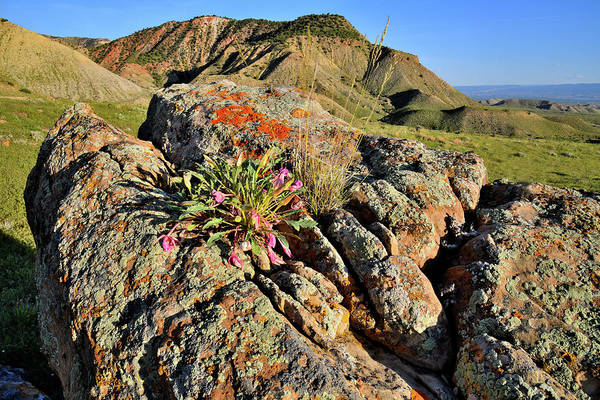 Photograph - Wildflowers Bloom Atop Boulder In Book Cliffs by Ray Mathis
