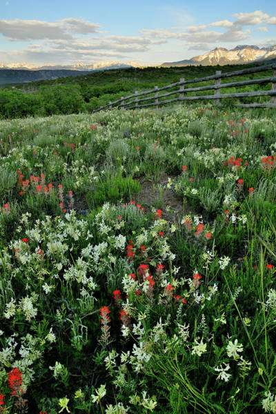 Photograph - Wildflowers Bloom Near Dallas Divide by Ray Mathis