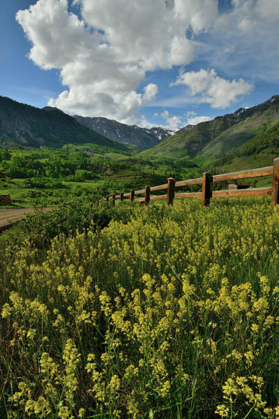 Photograph - Wildflowers Bloom Near Telluride Colorado by Ray Mathis