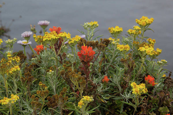 Photograph - Wildflowers By The Sea by Marie Leslie