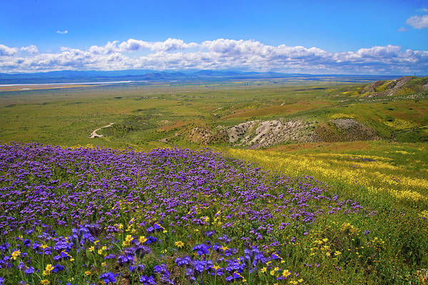 Photograph - Wildflowers High On The Carrizo - Superbloom 2017 by Lynn Bauer