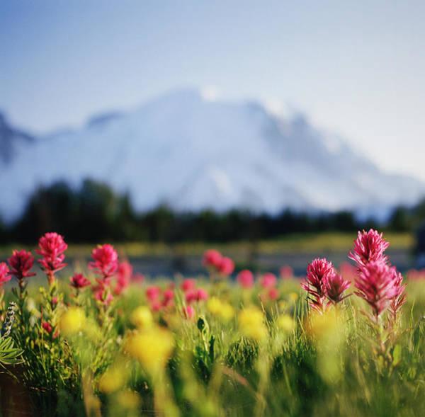 Wildflowers In Mountainous Range Art Print
