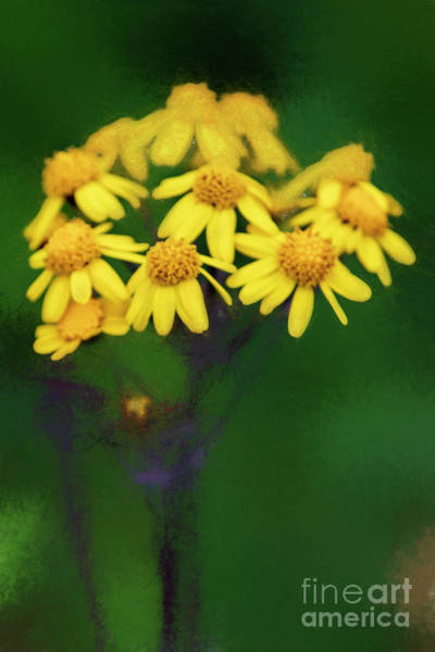 Wall Art - Digital Art - Wildflowers In Shenandoah National Park 7502vtics by Doug Berry