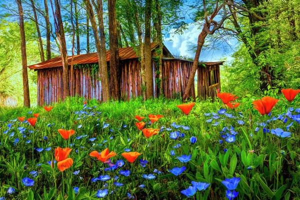Photograph - Wildflowers In The Country by Debra and Dave Vanderlaan