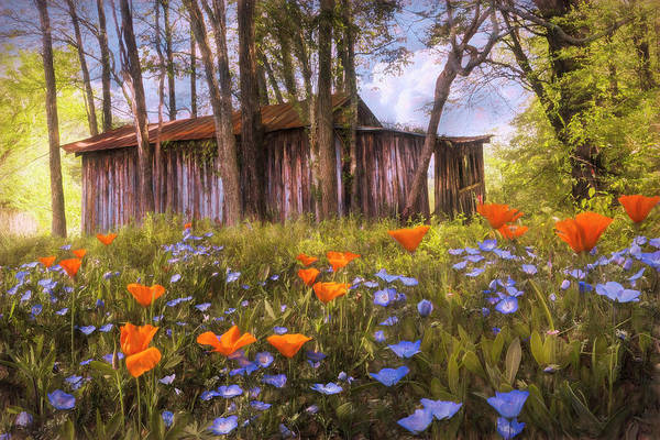 Wall Art - Photograph - Wildflowers In The Country Painting by Debra and Dave Vanderlaan