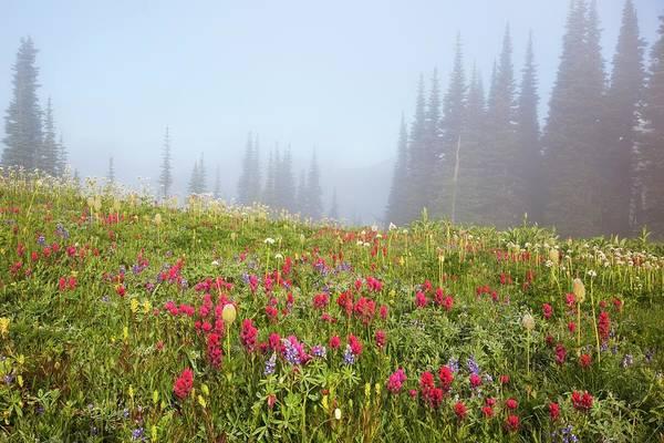 Wildflowers In The Morning Fog In Art Print