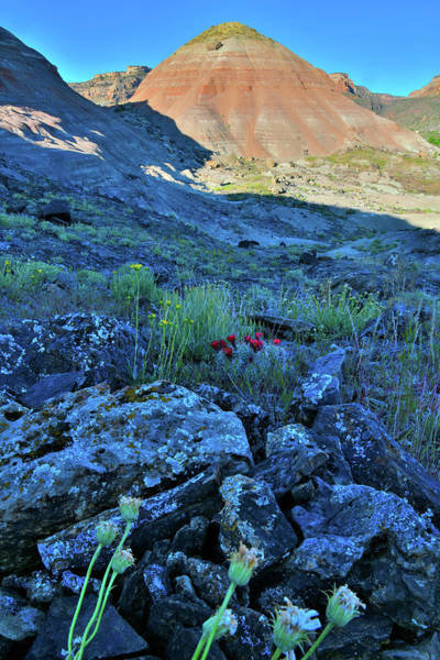 Photograph - Wildflowers In The Shadows Of Ruby Mountain by Ray Mathis