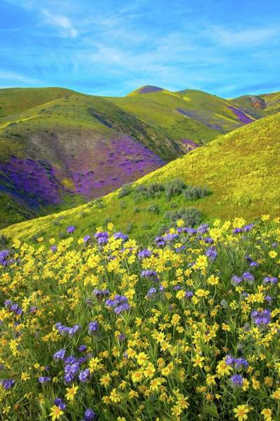 Photograph - Wildflowers In The Temblors - Superbloom 2019 by Lynn Bauer