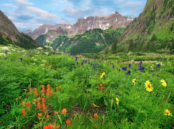 Wall Art - Photograph - Wildflowers In Yankee Boy Basin, San by Tim Fitzharris