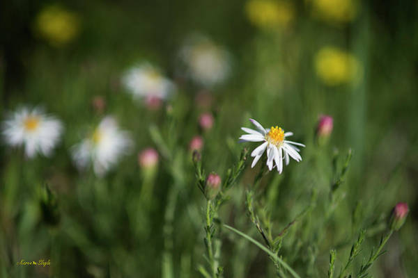 Photograph - Wildflowers by Karen Slagle