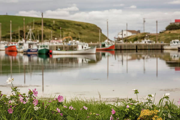 Atlantic Canada Wall Art - Photograph - Wildflowers Of Deadmans Pond by Everet Regal