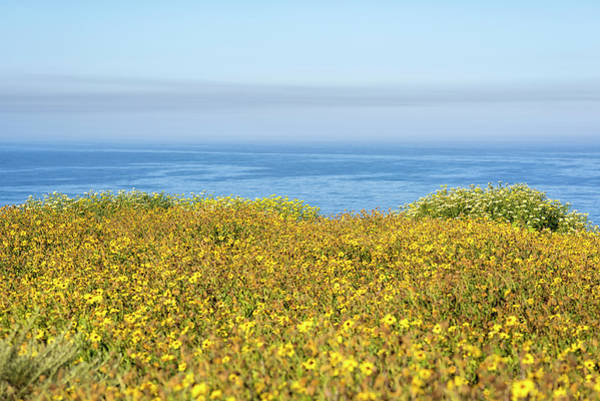 Photograph - Wildflowers On The Edge Of The Sea by Joseph S Giacalone