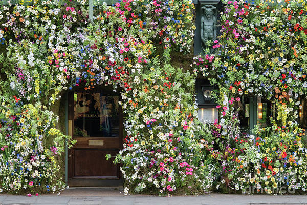 Photograph - Wildflowers On The Ivy Kings Road London by Tim Gainey