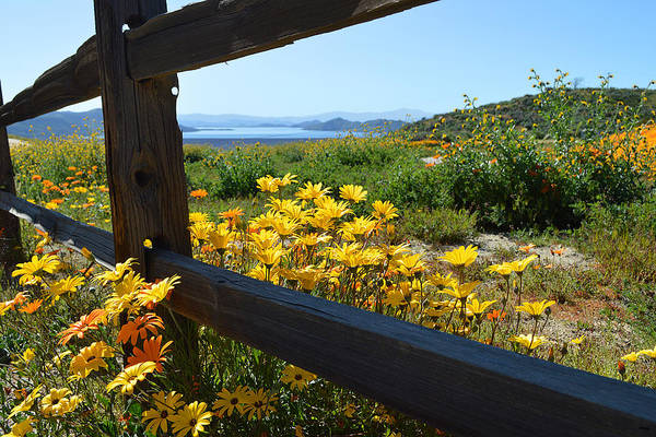 Photograph - Wildflowers Over The Lake by Glenn McCarthy Art and Photography