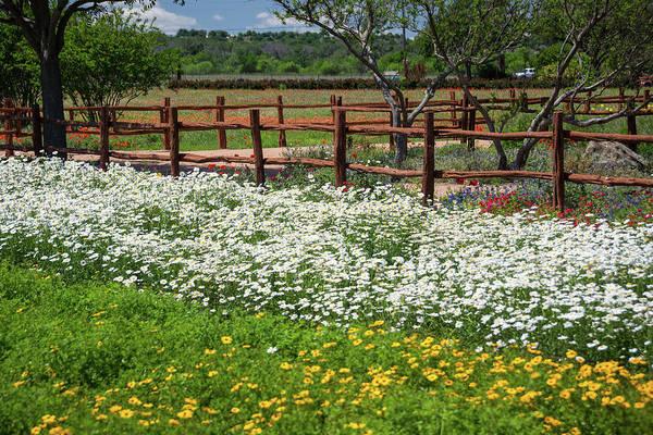 Fredericksburg Wall Art - Photograph - Wildflowers by Roberta Przybylski