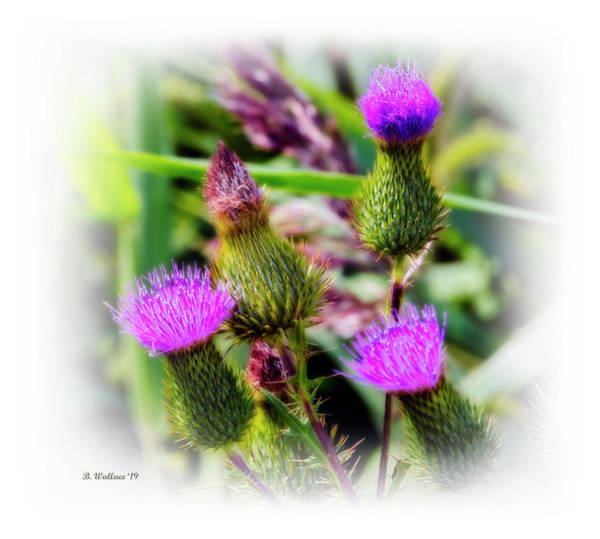 Wall Art - Photograph - Wildflowers Sandy Pt St Pk by Brian Wallace