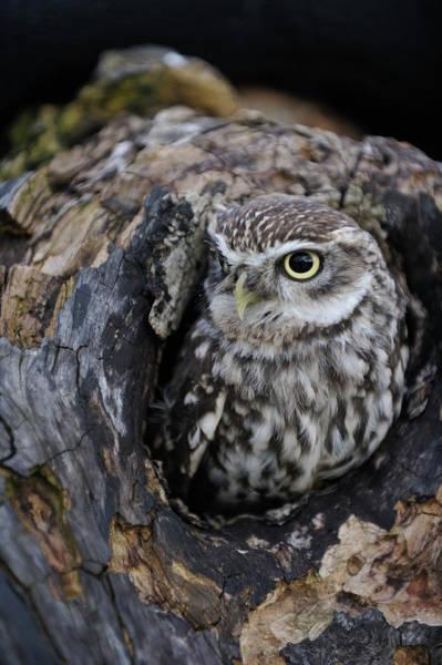 Hiding Photograph - Wildlife Photography - Gloucester Barn by Photoplus Magazine