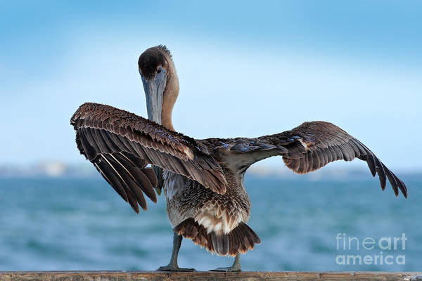 Wall Art - Photograph - Wildlife Scene From Ocean. Brown by Ondrej Prosicky