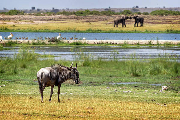 Amboseli Wall Art - Photograph - Wildlife Wetlands by Susan Schmitz