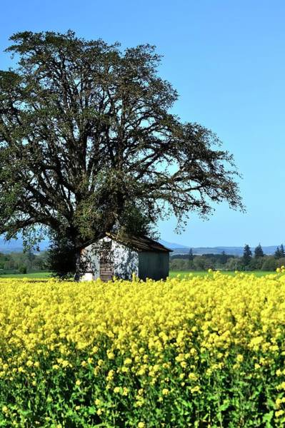 Photograph - Willamette Valley Spring Crop by Jerry Sodorff