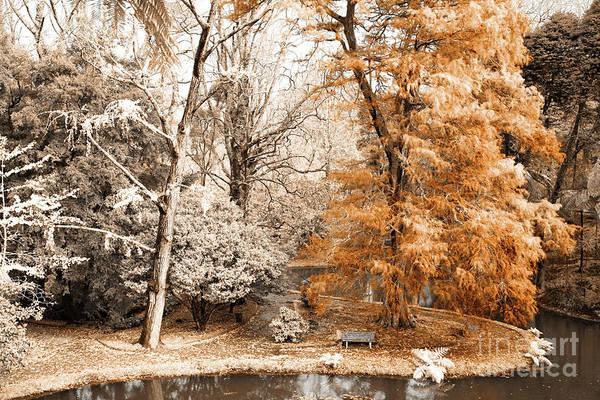 Wall Art - Photograph - Willow Tree by Gaspar Avila